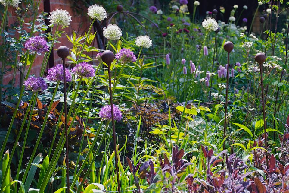 Herbaceous borders in May
