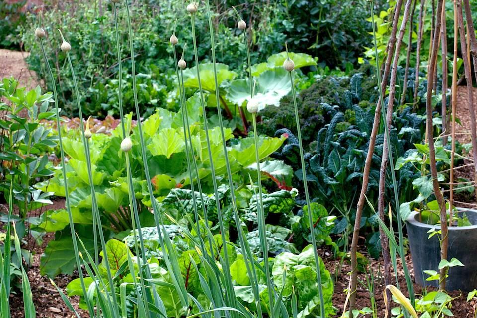 June Kitchen Garden