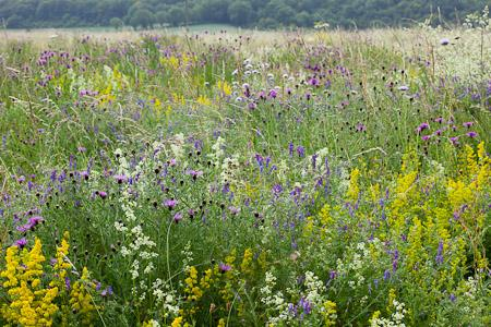 Sarah Raven's Wild Flowers (copyright Jonathan Buckley)
