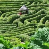 Maze Glendurgan Garden in Cornwall