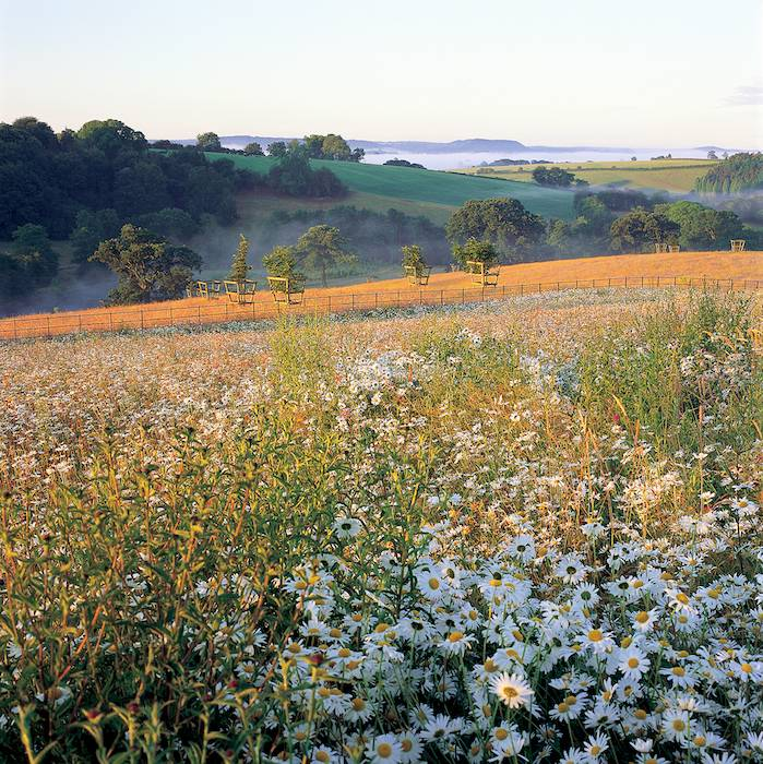 Peter Clay's stunning wild flower meadow (Photograph copyright Sabina Rüber)