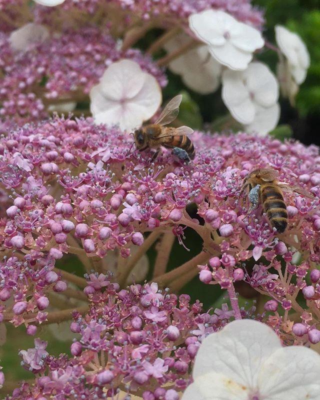 Laden with blue pollen....