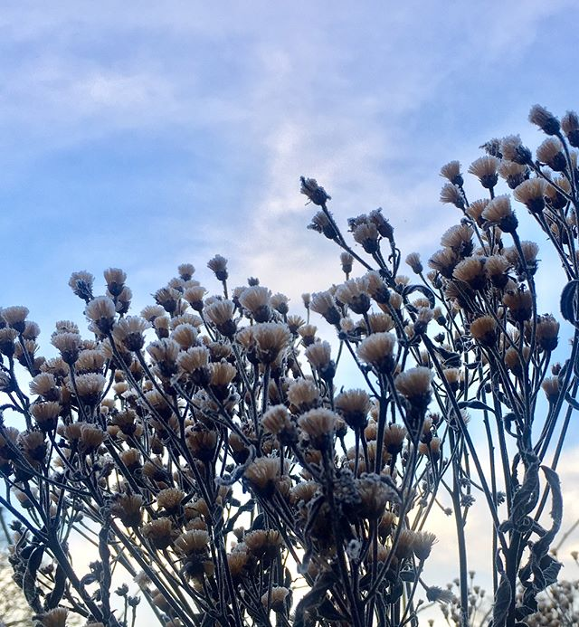 And the Oscar for best frosty seed heads goes to....