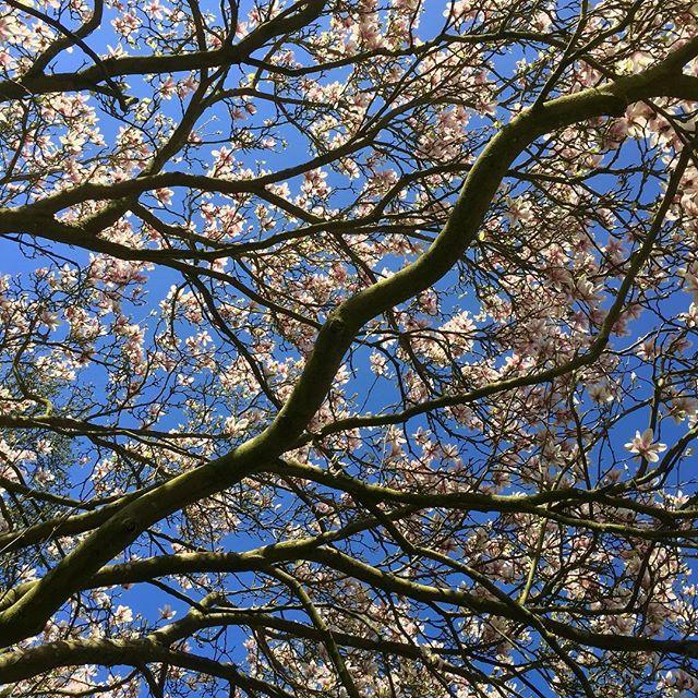 Underneath the ma-gnolia tree....