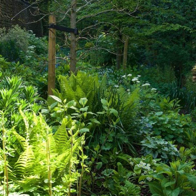 Fast becoming my favourite area of the garden. Tree stakes can hopefully go End of the year....