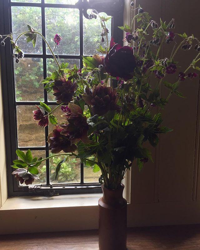 Spent hellebores, geranium and one rogue tulip....