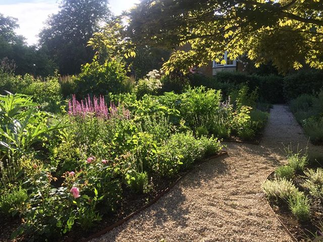 Early evening sunshine in the new #herbgarden....