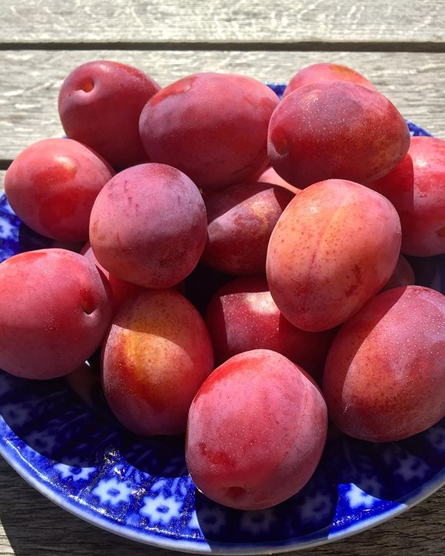 For many, nothing but the humble Victoria plum. For us, OUR very own Victoria plums.....