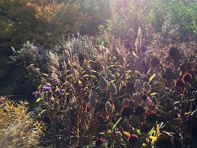 Seed heads in the sunshine....
