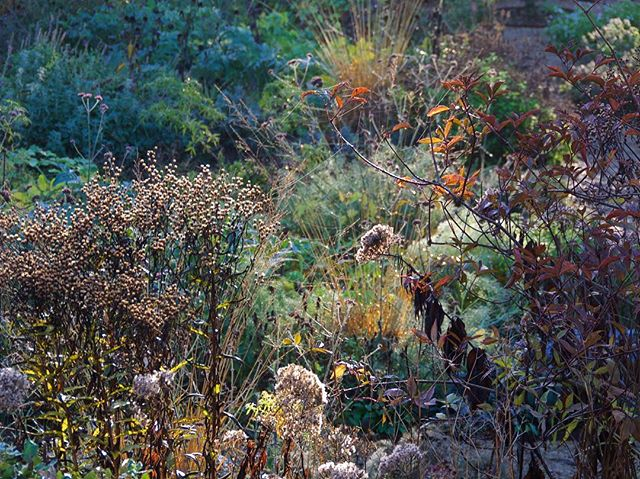Copper tones, yellows, browns, purples, morning dew, spider webs, seed heads, birdies -> unadulterated  autumn bliss